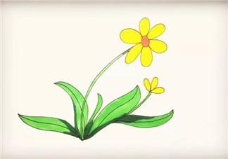 儿童简笔画太阳花 太阳花图片简笔画步骤