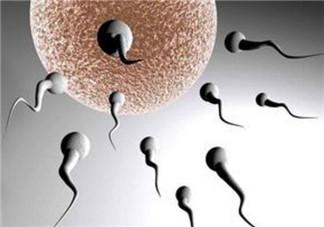 男性备孕期间注意事项 备孕精子禁欲几天最好