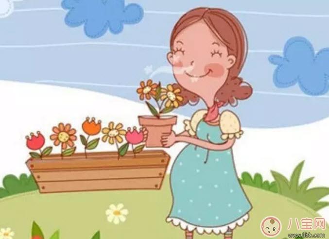 孕妇不能养什么花草 孕妇适合养哪些花草(适合孕妇养的花草名单)