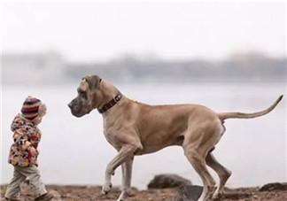 小宝宝拿狗盆里的狗食 夏季小宝宝如何与狗狗相处