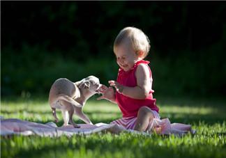 宝宝宠物过敏怎么办 快速摆脱过敏的方法有哪些