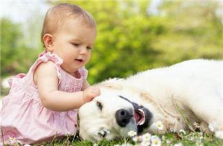 2018狗年宝宝起名用什么字好  有哪些字适合狗年宝宝用
