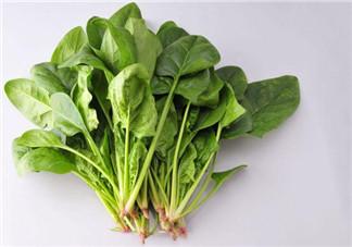 哺乳期可以吃菠菜吗 哺乳期不能吃哪些蔬菜