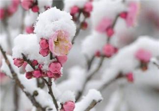 冬天下的雪能吃吗 小孩吃雪的危害有哪些