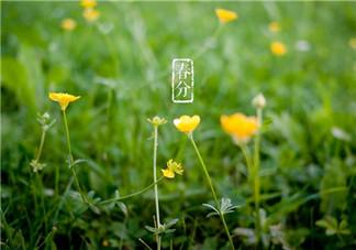 春分节气早安心语问候语祝福短信 今日春分说说心情短语