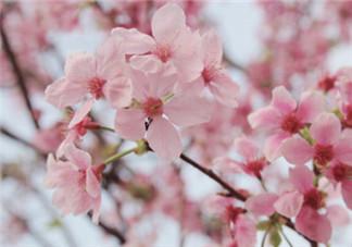 带孩子看樱花的说说句子 和孩子看樱花的心情说说