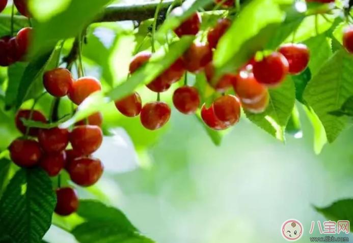 孕中期吃什么水果好2018 孕妇怀孕中期吃什么水果合适
