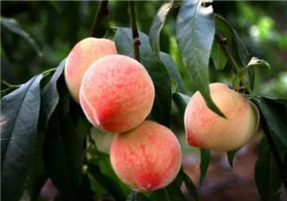 寒性体质孕妇能吃水果吗 孕妇寒性体质吃什么水果好