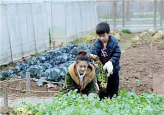 安迪为什么分不清葱和花 如何教孩子认识农作物