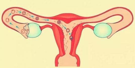 刚开始促排阶段能有性生活吗 试管婴儿促排这段时间能同房吗