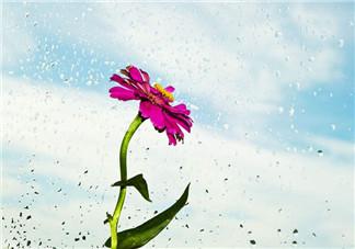 夏季午后的雨心情说说 2018天热午后下雨的心情感触说说朋友圈