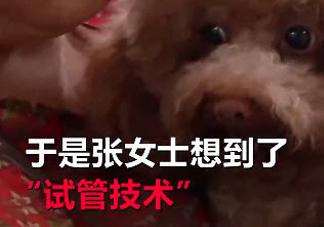 宠物可以做试管吗 宠物能不能人工受孕