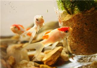 陪孩子养鱼的心情说说 和孩子一起养鱼的感慨句子说说