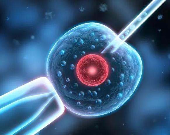 试管婴儿出生的宝宝会有缺陷吗 养育是先天遗传和后天养育的结合