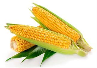 卵巢早衰吃什么可以预防 担心卵巢早衰吃玉米有用吗