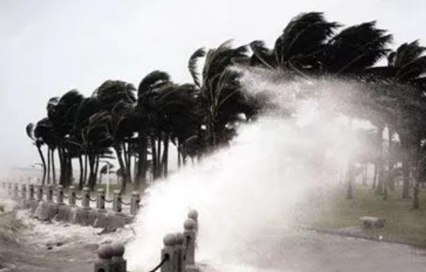 台风山竹来了作文 描写台风过后作文2018