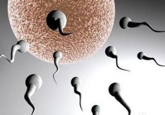 精子活力不够怎么调理     精子活力低调理方法