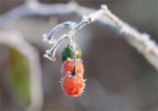 和霜降相关的诗句 关于霜降的古诗赏析