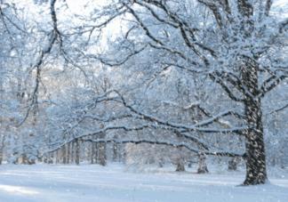 小雪节气养生食谱推荐  2018小雪食谱做法