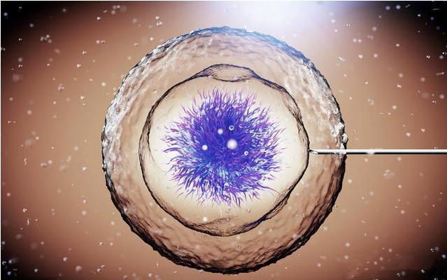冷冻胚胎会影响试管婴儿质量吗 冷冻胚胎可以保存多久