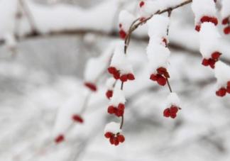 大雪节气的诗句有哪些  2018大雪节气诗句汇总