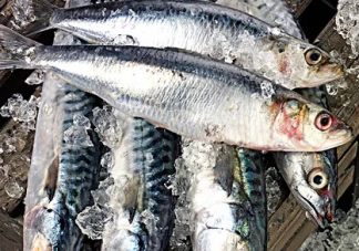 宝宝吃鱼多少合适 每周吃多少鱼量合适