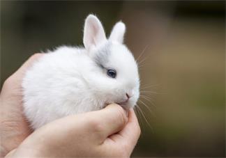 宝宝睡前故事  想穿花衣的小白兔