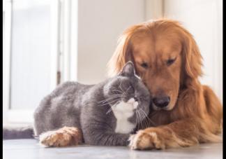 被狗咬伤一定要做24小时之内注射疫苗 被狗咬伤怎么办