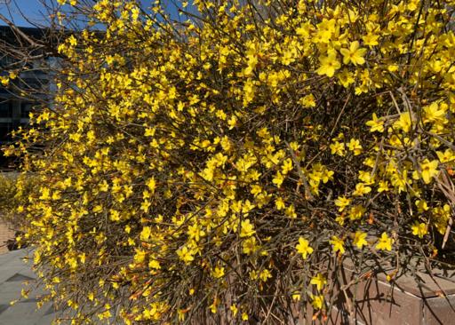 关于春天花开了的说说_关于春天花开了的说说 春天来了感慨朋友圈2019