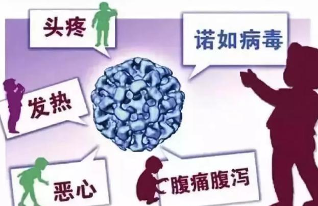 幼儿园诺如病毒预防告家长书 幼儿园诺如病毒预防2019