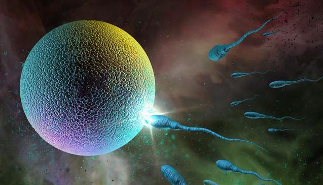 【双侧卵巢可见优势卵泡是什么意思】双侧卵巢可见优势卵泡是什么意思 卵泡长多大女性才能怀孕