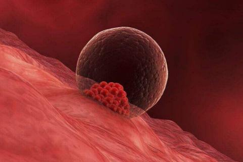 怎么将卵子养的又大又圆 吃什么促进卵泡发育