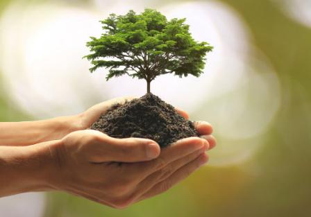小区植树节活动邀请函 关于植树节活动的通知