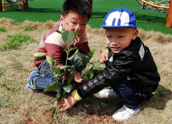 2019幼儿园植树节美篇|2019幼儿园植树节报道 幼儿园312植树活动报道