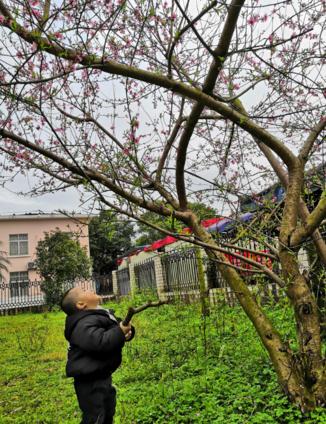 植树节通知内容怎么写 2019植树节活动通知