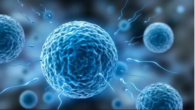 禁欲可以提高精子质量_禁欲可以提高精子质量增加受孕几率吗 怎么提高精子成活率