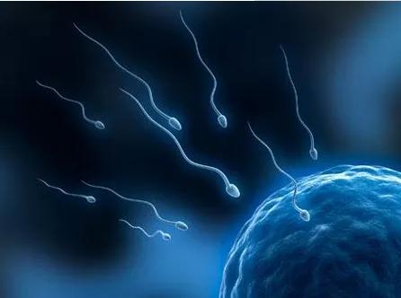禁欲可以提高精子质量增加受孕几率吗 怎么提高精子成活率