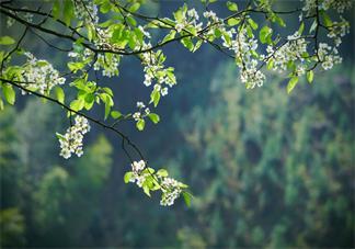 形容春天赏花的说说 拍照赏花的心情怎么发朋友圈