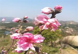 春天赏花的优美句子 春天拍照赏花的心情说说