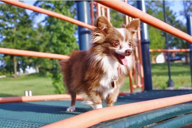 给孩子养宠物要满足什么条件 养宠物对孩子的成长的好处