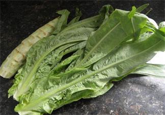 莴苣叶子是油麦菜吗 莴苣叶子和油麦菜有什么区别