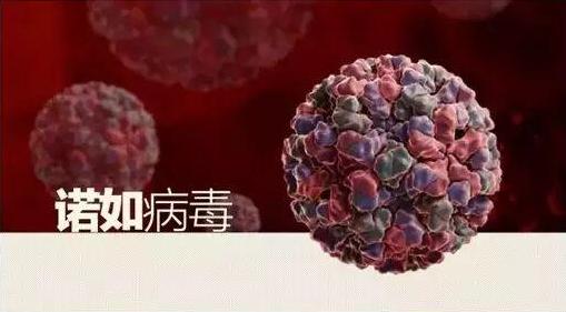 诺如病毒是怎么传染的 什么情况下诺如病毒要及时就医
