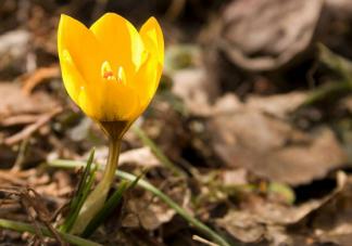 春季怀孕容易早产是真的吗 春季怎么备孕