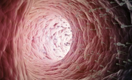 输卵管积水是怎么回事?能治疗好吗?|输卵管积水是怎么回事 输卵管积液的原因