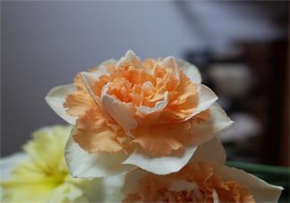 形容赏花漂亮唯美的句子 形容花美心情好说说朋友圈