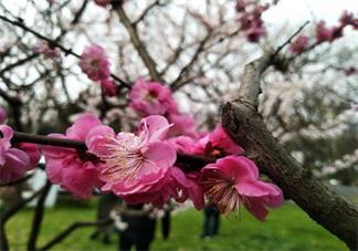 关于春分快乐的心情感慨 春分快乐要发什么比较应节气