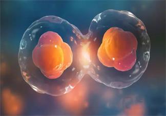 试管婴儿移植胚胎成功的几率有多高 影响试管婴儿移植因素有哪些
