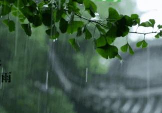 谷雨节气吃什么食物好 谷雨传统食物推荐