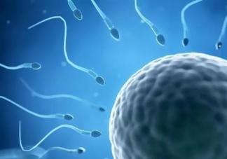 精子和卵子的结合需要什么条件 精子多久可以遇到卵子