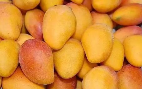 哺乳期可以吃芒果吗 哺乳期吃芒果影响下奶吗